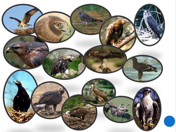 Загадки по биологии на тему птицы