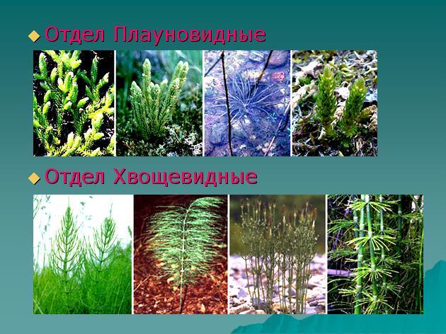 Отдел Покрытосеменные Цветковые Растения 7 Класс ГДЗ