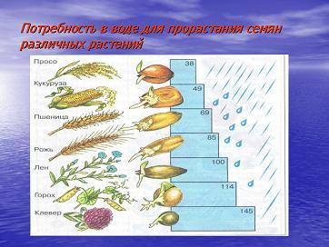 Низкоуглеводная диета запрещенные продукты