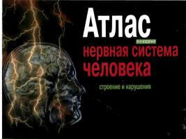Атлас - Нервная система человека - Строение и нарушения - Астапов В.М., Микадзе Ю.В.