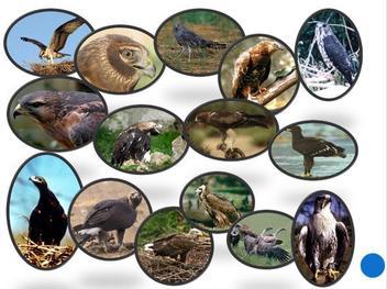 Презентация - Зоология - наука о животных