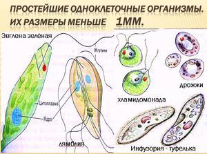 Презентация по биологии - Клетка - единица строения жизнедеятельности организмов