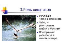 Презентация по биологии - Биотические отношения - Взаимосвязи между живыми организмами.