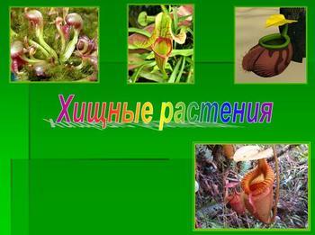 Презентация по биологии - Хищные растения
