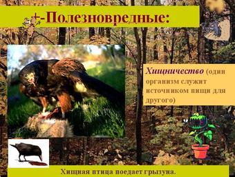 Презентация по биологии - Типы экологических взаимоотношений организмов - 9 класс