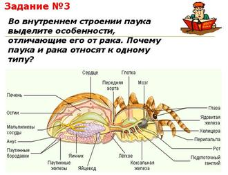 Презентация по биологии - Многообразие паукообразных и их значение в природе и жизни человека - Общая характеристика паукообразных
