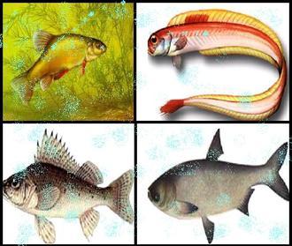 Презентация по биологии - Внешнее строение рыб
