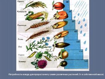 Презентация по биологии - Рост и развитие растений