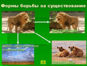 Презентация по биологии - Учение Чарльза Дарвина о естественном отборе