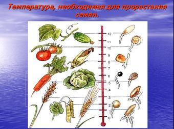 Презентация по биологии - Условия прорастания семян
