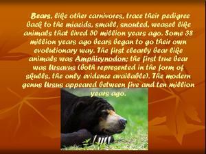 Презентация по биологии - Медведи - Bears