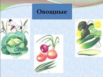 Презентация по биологии - Дикорастущие и культурные растения