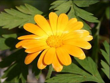 Презентация - Цветок - Его строение и значение