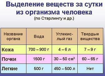 Презентация - Мочевыделительная система