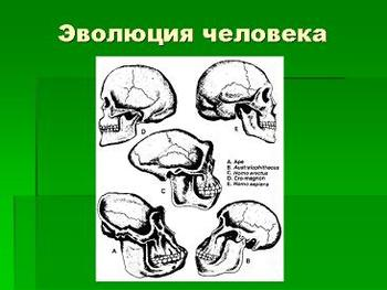 Презентация по биологии - Эволюция человека