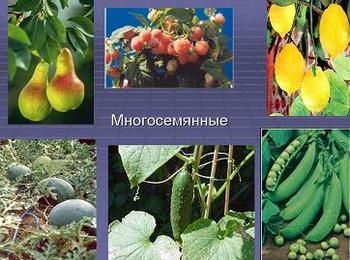 Презентация по биологии - Строение семени растений