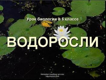 Презентация по биологии - Водоросли
