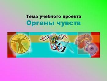 Презентация по биологии - Органы чувств