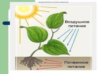 Презентация по биологии - Почвенное питание растений