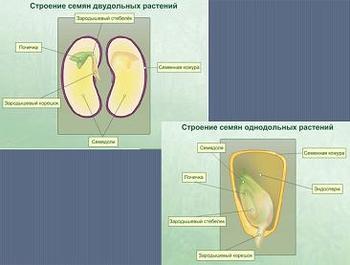 Презентация по биологии, рост и развитие растений, онтогенез