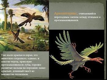 Презентация по биологии - Переходные формы в эволюции