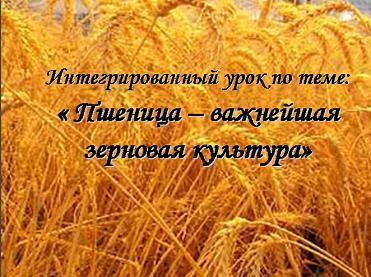 Презентация - Пшеница важнейшая зерновая культура