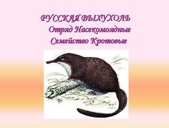 Презентация - Красная книга животных Челябинской области