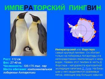 Презентация - Виды пингвинов - Пингвинарий - Все о пингвинах