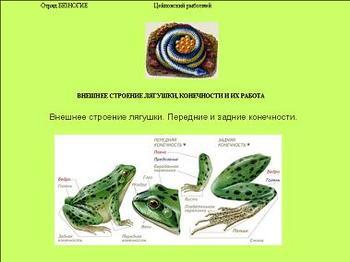 Презентация - Класс Земноводные