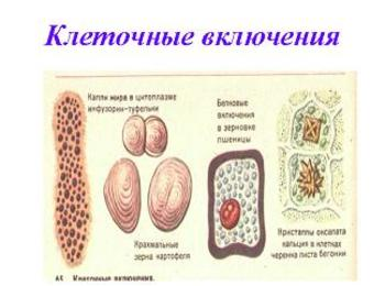 Презентация - Клетка - система систем