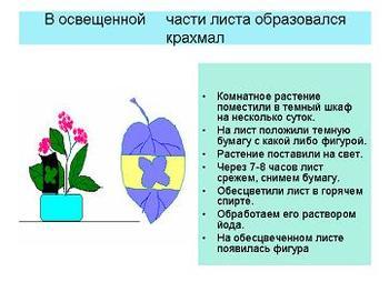 Презентация - Фотосинтез