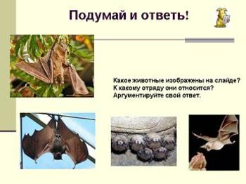 Презентация - Значение млекопитающих в природе и жизни человека