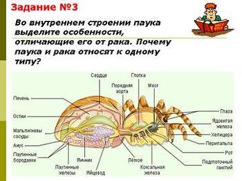 Презентация - Многообразие паукообразных и их значение в природе и жизни человека - Общая характеристика паукообразных