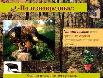 Презентация - Типы экологических взаимоотношений организмов
