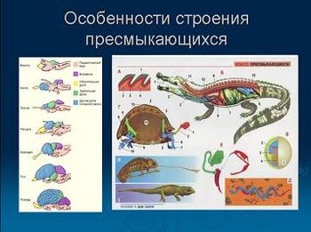 Презентация - Пресмыкающиеся или рептилии