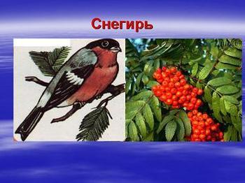 Презентация - Отряды птиц - воробьинообразные и голенастые