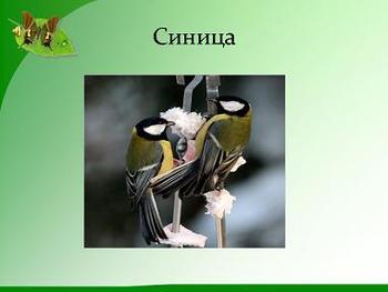 Презентация - Птицы - Мои друзья