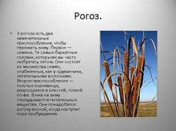 Презентация - Прибрежно-водные растения
