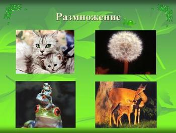 Презентация - Размножение и оплодотворение у растений