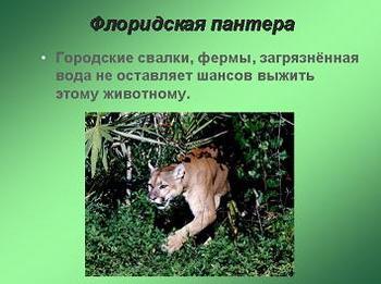 Презентация - Красная книга планеты Земля - Почему вымирают животные?
