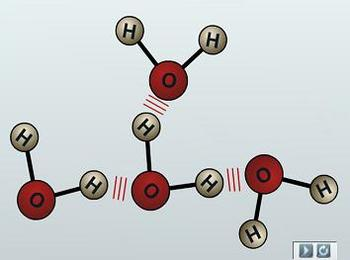 Презентация - Неорганические вещества клетки