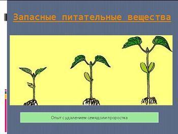 Презентация - Рост и развитие растений