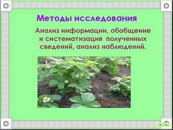 Презентация - Влияние выхлопов транспорта на кислотность почв Сургута