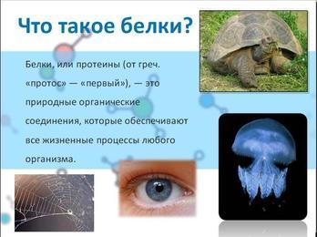 Презентация по химии - Белки